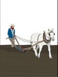 красивейшая лошадь фермы чертежа Стоковое Изображение