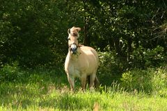 красивейшая лошадь Стоковое Фото