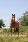 красивейшая лошадь Стоковое Изображение