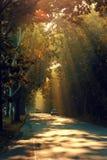 красивейшая дорога Стоковое фото RF