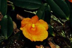 красивейшая орхидея цветка стоковое изображение rf