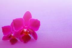 Красивейшая орхидея цветка Стоковые Фотографии RF