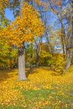 Красивейшая осень в парке Стоковая Фотография RF