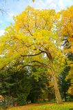 Красивейшая осень Стоковые Изображения