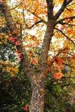 Красивейшая осень Стоковое Изображение