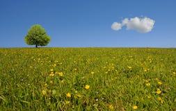 красивейшая панорама Стоковая Фотография RF