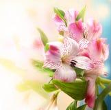 Красивейшая предпосылка цветков стоковые фотографии rf