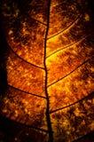 Красивейшая предпосылка листьев Стоковая Фотография