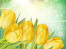 Красивейшая предпосылка тюльпанов 10 eps Стоковая Фотография RF