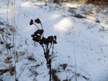 красивейшая природа зима белизны снежинок предпосылки голубая Ландшафт природы зимы field зеленый цвет Стоковое Фото