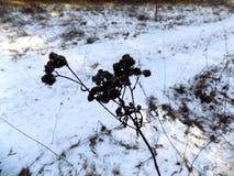 красивейшая природа зима белизны снежинок предпосылки голубая Ландшафт природы зимы field зеленый цвет Стоковое Изображение