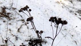 красивейшая природа зима белизны снежинок предпосылки голубая Ландшафт природы зимы field зеленый цвет Стоковые Фотографии RF