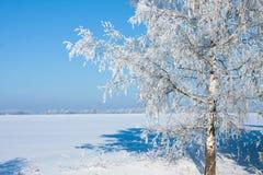 Красивейшая природа, зима Стоковая Фотография RF