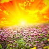 красивейшая природа Стоковая Фотография