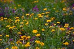 красивейшая природа Стоковые Фото