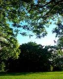 красивейшая природа Стоковые Фотографии RF