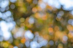 Красивейшая природа Bokeh Стоковая Фотография