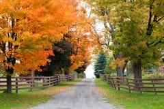 Красивейшая проселочная дорога в листве осени стоковое фото rf