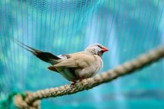 красивейшая птица меньшее временя Стоковое Изображение RF