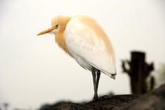 красивейшая птица стоковое фото