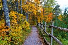 Красивейшая пуща в осени Стоковая Фотография