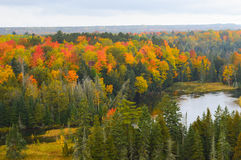 Красивейшая пуща в осени Стоковая Фотография RF