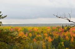 Красивейшая пуща в осени Стоковые Фотографии RF
