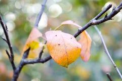 Красивейшая пуща в осени Стоковые Фото