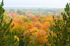 Красивейшая пуща в осени Стоковое фото RF