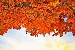 Красивейшая пуща в осени Стоковые Изображения