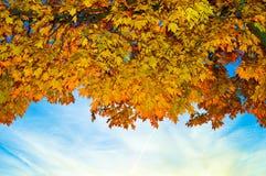 Красивейшая пуща в осени Стоковое Изображение RF