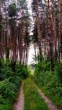красивейшая пуща Стоковые Фото
