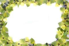 Красивейшая рамка цветков Стоковые Изображения RF