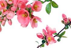 красивейшая рамка цветков Стоковые Изображения