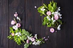 красивейшая рамка цветков Стоковая Фотография