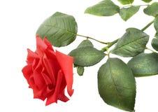 Красивейшая роза красного цвета стоковая фотография rf