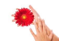Красивейшая рука женщины с цветком стоковое фото