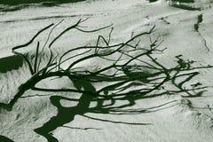 красивейшая смерть Стоковое Фото