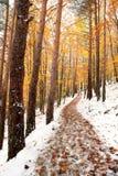 Красивейшая снежная пуща Стоковые Изображения