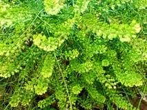 красивейшая трава Стоковые Изображения RF