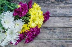 красивейшая хризантема Стоковые Изображения RF