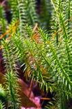 Красивейшая цветастая осень Стоковые Фотографии RF