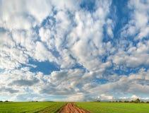 Красивейшее голубое небо с облаками и зеленым полем Стоковое Изображение