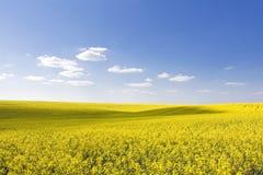 красивейшее голубое ясное небо рапса поля стоковые изображения rf