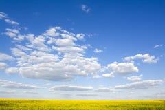 красивейшее голубое ясное небо рапса поля стоковое изображение rf