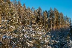 красивейшее голубое небо ландшафта Стоковое Изображение