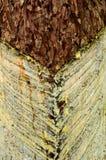 красивейшее естественное Стоковые Фотографии RF