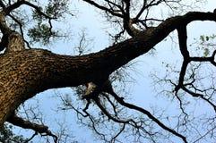 красивейшее естественное Стоковая Фотография RF