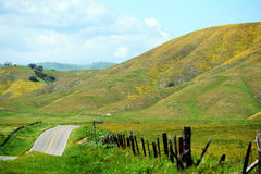 красивейшее лето дороги дня сельской местности Стоковые Фотографии RF