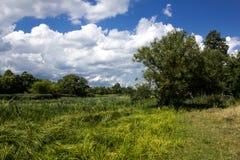 Красивейшее лето Стоковые Фотографии RF